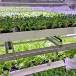 ベルギーUCS社、連結拡張可能なモジュールタイプの自動化・植物工場システムを販売