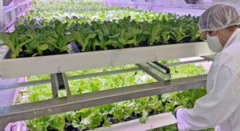 ベルギーUCS社の新商品から見た「競争激化するコンテナ型植物工場にて生き残る方法」