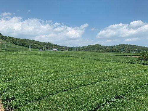 伊藤園、静岡県にて「お~いお茶」専用茶葉の生産面積・展開地区を拡大
