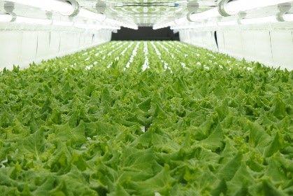 ファミリーマート、植物工場やさいの採用拡大。全国約16,000店規模で展開へ