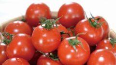 深作農園のミニトマト、有機農業技術を活用した野菜栄養価コンテストで最優秀賞を受賞