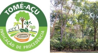 フルッタフルッタ「アグロフォレストリー」栽培による産地認証取得カカオ豆の輸入を開始