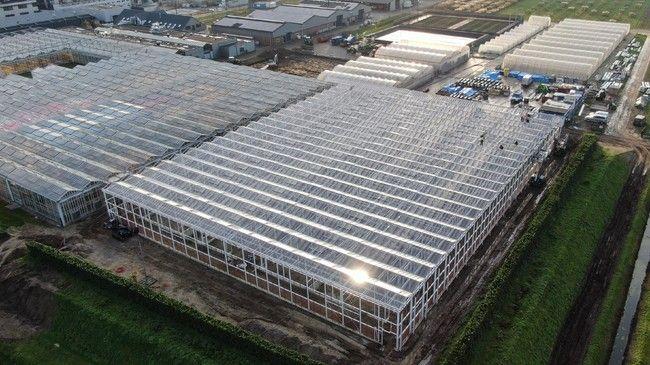 イノチオアグリ、オランダの施設園芸・植物工場メーカー大手・ボスマン社と業務提携