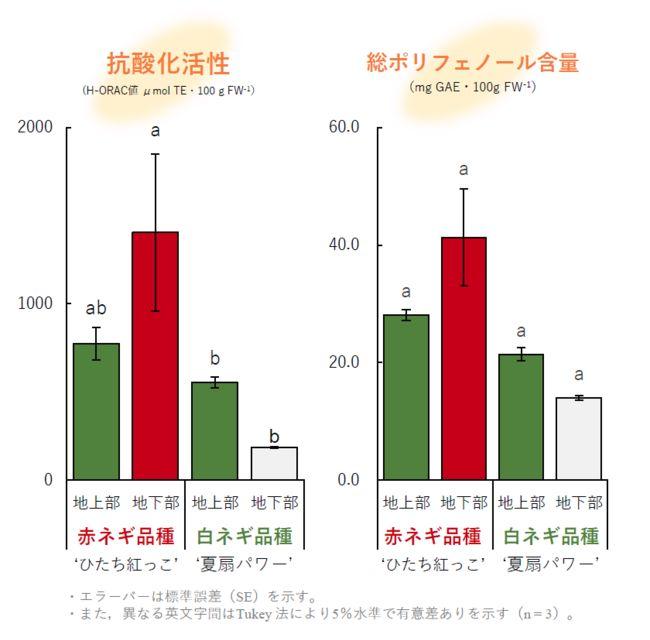 国立科学博物館など、茨城県特産の赤ネギ品種「ひたち紅っこ」から新しいアントシアニンを発見