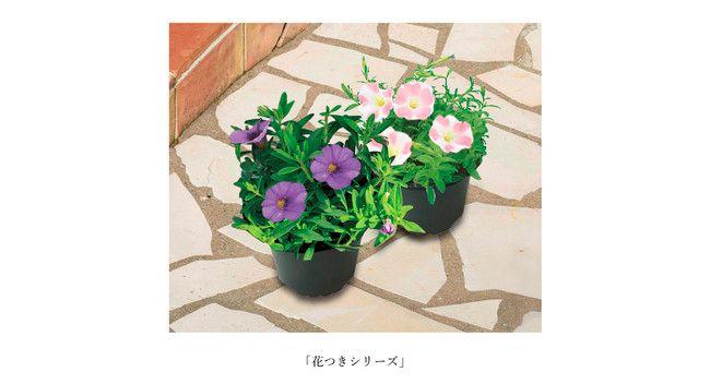 サントリーフラワーズ、花と野菜の展示会を自宅でも楽しむため「オンライン3D展示」を導入