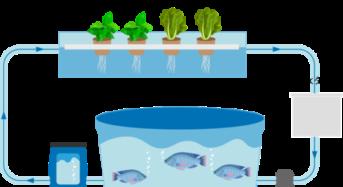 ウェルフェアおきなわ、障がい者雇用・農福連携型「アクアポニクス」の実験農場を開設