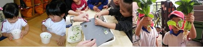 ダイドーハント、保育園・幼稚園などの教育分野向けの植物工場・水耕栽培キット「わたし菜園」を保育博2020でも出展
