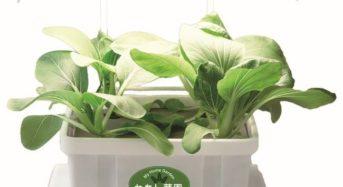 ダイドーハント、保育園・幼稚園などの教育分野向けの植物工場・水耕キット「わたし菜園」を保育博2020でも出展