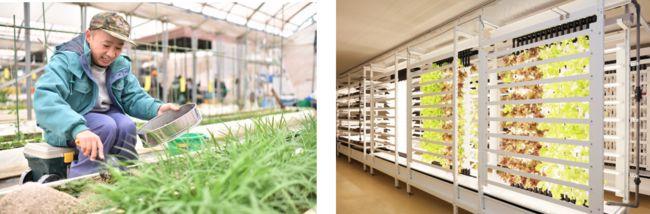 エスプールプラス、企業向け貸し農園ソーシャルファームが大阪へ初進出