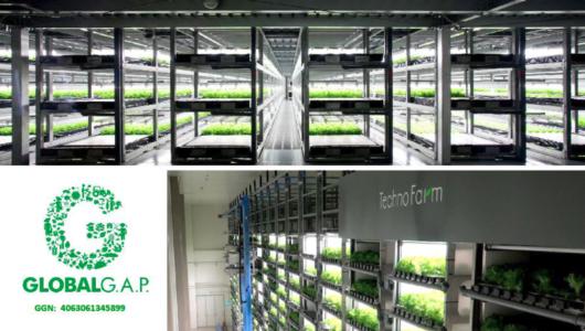 スプレッド、2カ所の植物工場・亀岡プラントとテクノファームけいはんな「GLOBAL G.A.P.」の認証を取得