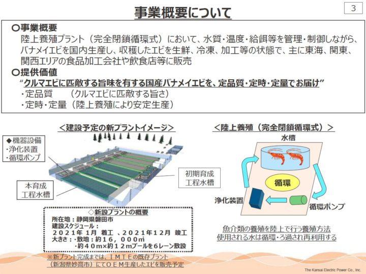 関西電力、完全閉鎖循環式・陸上養殖にて「バナメイエビ」の生産へ
