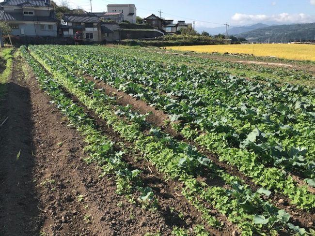クボタファーム「おれん家農園」にてムスカ有機肥料の実証実験を開始