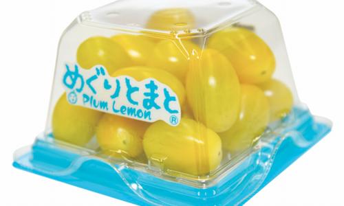 コロナ対策にもピッタリ・養液栽培によるヘタなしトマト「Plumシリーズ」の出荷が本格化へ