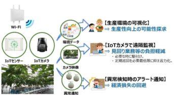 NTT東日本、IoTを活用したメロン水耕栽培による通年生産に関する実証実験を開始