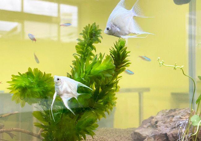 熱帯魚の飼育・植物工場による野菜の栽培が体験できる放課後等デイサービスが宇都宮にオープン