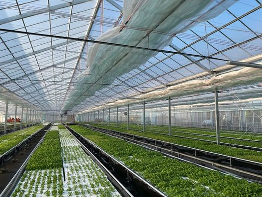 グリングリン、水耕・植物工場施設を新たに稼働。多品種ベビーリーフの生産拡大へ