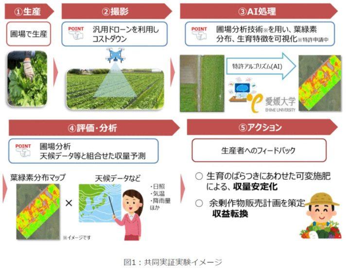 NTT西日本グループ、愛媛大などと野菜の生育状況を見える化。独自の圃場分析技術の開発へ