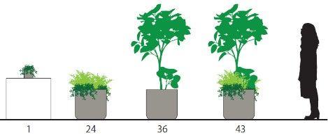 第一園芸、オフィス機能に応じた適切な緑のボリュームを算出。三井デザインテックの新本社に採用