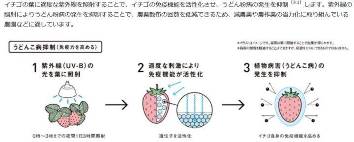 パナソニック ライティングデバイス、イチゴのうどん粉病の発生を抑制する「UV-B電球形蛍光灯」を販売