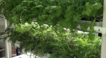 西友、店舗内・植物工場の栽培品目と生産量の拡大へ