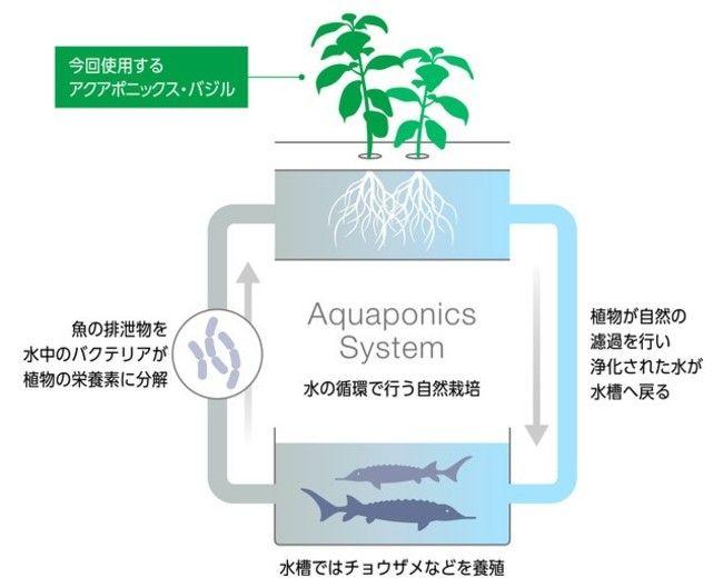 チョウザメと野菜のアクアポニクス施設、北海道のホテル敷地内に建設