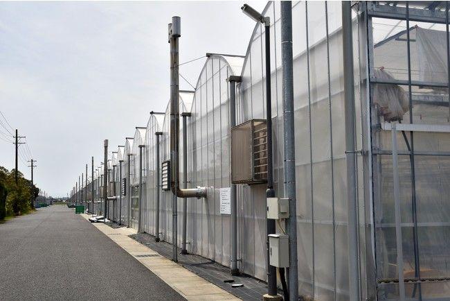 イオンアグリ創造のトマト植物工場、ココカラ社のやしがら培土を採用