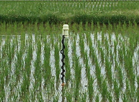 白鶴ファーム、酒米生産におけるICTを活用したスマート農業の実証実験へ