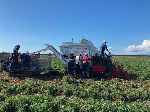 ヤンマーアグリジャパン、JAいわみざわ・カゴメと連携。加工用トマト産地拡大へ
