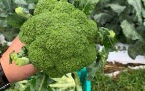 JR東日本と農業総研、首都圏消費地へ朝どれ農産物を輸送する実証実験